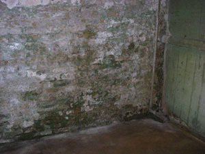 Mold and Mildew in Basement Home Inspection | House Detective | Southeast Wisconsin